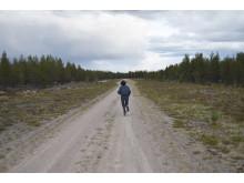 Mellan flygfältet och den omkringliggande skogen  / Gerd Aurell