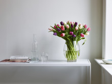 Tulipaner i rosa og lilla