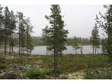Skogseiendommen Dalføret er til salgs i Buskerud