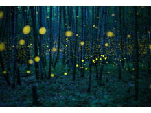 Kei-Nomiyama-Japan_Winner,-Open,-Low-Light_2016-Sony-World-Photography-Awards_Enchanted Bamboo Lights