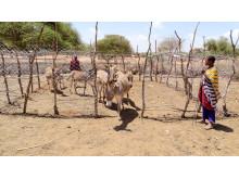 Gehege sind ein einfacher, aber sehr effektiver Schutz vor Esel-Diebstahl.