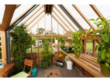 allt du behöver i våra cederträväxthus