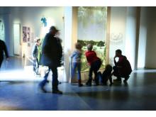 Medeltidsmuseet, Vädersolstavlan