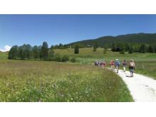 An Alpine flower meadow