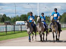 Kavli förlänger samarbetet med Svenska Ridsportförbundet och svensk distansritt