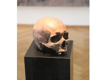 Kranium fra Hundstrup Mose