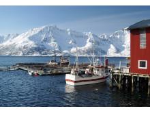 Levendelagring av torsk