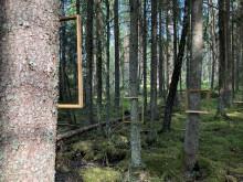 Konstinstallation i Billuddens naturreservat av Leicy Olsborn Björby