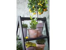 Medelhavsväxter, citrus, timjan, lager