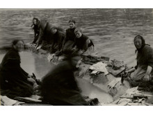 Fisken vaskes ved Vestmanhavn
