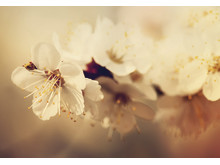 "Canvastavla ""Dream Flower"""