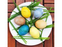 Påsk: färgade ägg