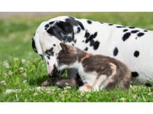 Så blir hunden och katten vänner