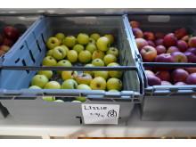 Äpplen för must och cider tas fram av SLU-forskare
