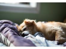 hund-hytta-sover