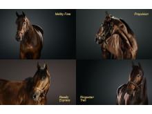 Stjärnornas krig. fyra gör upp om vem som ska bli Årets Häst: Mellby Free, Propulsion, Readly Express och Ringostarr Treb.
