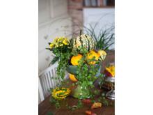Skål med växter till Halloween