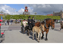 Häst Vagn på stan Foto Destination Läckö-Kinnekulle.jpg