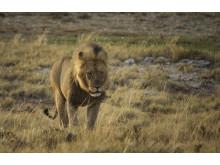 CS-301116-namibia_rx10-147