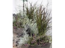Höstkruka med gräs