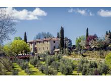 Olivgård, Toscana.