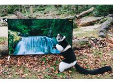 Sony 4K langurer & lemurer