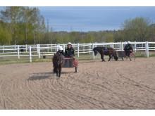 600 barn och ungdomar fick uppleva häst under 2012