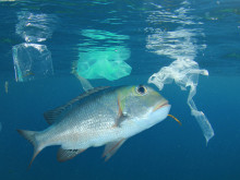 Fisk & plast