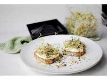 Linsgroddar med hummus på smörgås