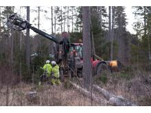 Röjningsarbete i Västernorrland