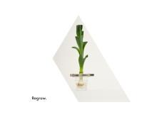Grönsaksodling Regrow – design Madeleine Nelson