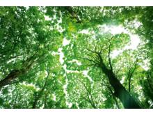 Trädplantering