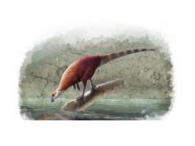 Ornitopoden Parkosaurus
