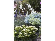 Recept på en lyckad plantering juni - juli