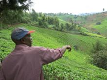 Teodlaren Samuel Ngochi Waweu vid sin odling