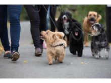 Charity Dog Walk