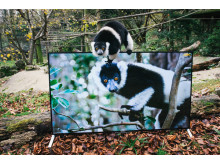 Sony 4K in Zoo_Lemur