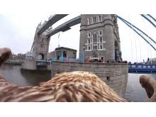 Eagle Eye View of London