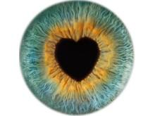 Vision Express eye love