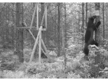 Grensevilt –svensk-norskt projekt om viltförvaltning