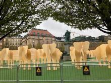 55 träelefanter har intagit Kungsträdgården.