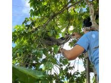 WTG-Suriname-Faultier-Rettung