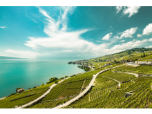 Das Weingebiet Lavaux am Genfersee