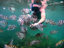 île Maurice_snorkelling ©MTPA_Bamba