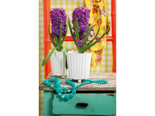 Lila hyacinter i kruka