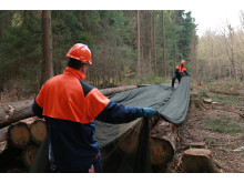 Storanet ® - Unik nät-baserad teknik erbjuder miljövänlig lösning för timmerskydd