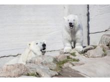 Ranua Polar Bear Cub 2