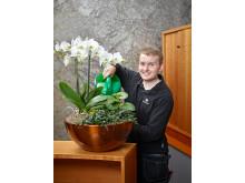 Tjänsteföretag/Växtinredning