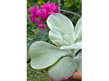 Kalla blad och varma blommor