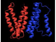 Membranprotein